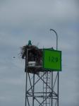 067-ospreys-nest